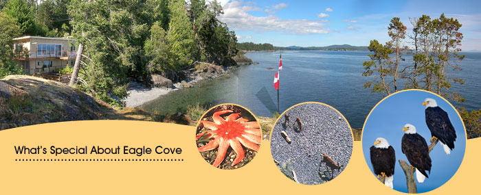 What's Special About Eagle Cove